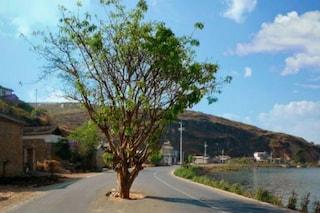 Cina: strade ed edifici deviati per non abbattere gli alberi