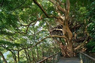 Giappone: ecco la più grande casa sull'albero che sia mai stata realizzata