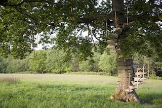Canopy stair: la prima scala a chiocciola fai da te per salire sugli alberi