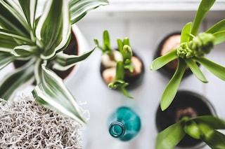 Giardini da interno: qual è la giusta pianta per la tua casa?