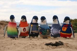 È l'uomo più vecchio d'Australia e lavora a maglia per coprire i pinguini feriti