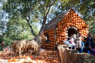 Halloween: ecco il villaggio creato con 50000 zucche