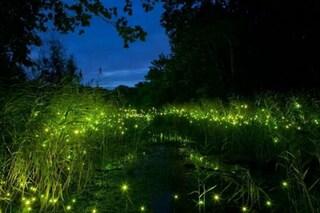 Addio lampioni: benvenuti nel primo parco a tema per lucciole