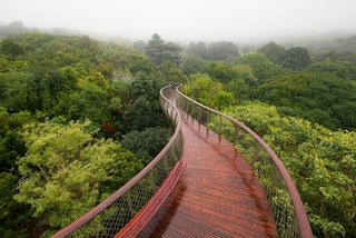 Città del Capo: ecco il ponte per camminare sugli alberi