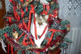 Come creare un albero di Natale a prova di gatto