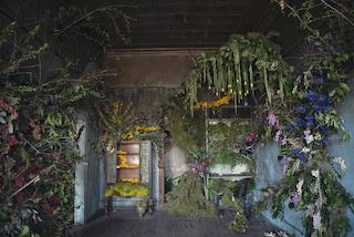 Flower House: ecco la casa abbandonata che rivive con i fiori