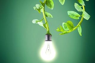 Natura power: come ricavare energia elettrica dalle piante
