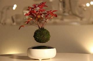 Air Bonsai: ecco la prima pianta che fluttua e non è una magia