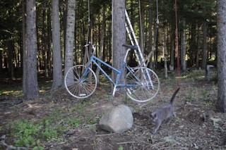 Sembra una normale bicicletta ma quello che riesce a fare vi stupirà
