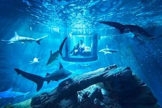 Dormire circondati dagli squali: ecco l'ultima proposta di Airbnb