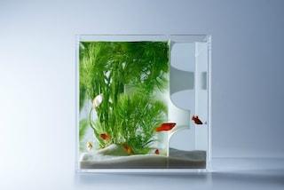 Ecco gli acquari più strani che abbiate mai visto