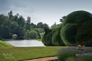 Omaggia il suo gatto con una gigantesca siepe: l'arte di Richard Saunders