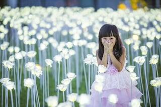 Light Rose Garden: questo giardino di rose luminose ogni sera si accende per amore