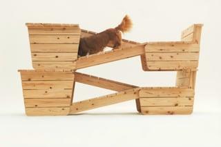 Design per cani: gli oggetti fai da te per conquistare il vostro amico a quattro zampe