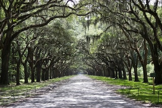 Savannah: la città più infestata degli Stati Uniti d'America