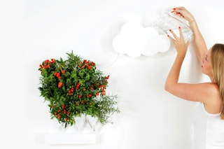 Plug & Plant: come coltivare un orto in casa