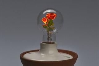 """Una lampada da fiaba: sembra uscita da """"La Bella e la Bestia"""""""