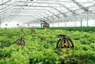 Plan Bee: ecco il drone che impollina le piante come una vera ape