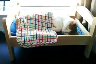 IKEA dona i suoi letti per bambole ai gatti abbandonati