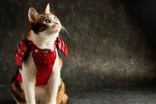 Armature per cani e gatti: l'originale idea di una società giapponese