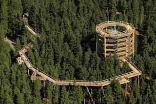 Treetop Walkway Lipno, la passerella sugli alberi che toglie il fiato