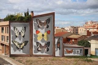 Mantra, lo street artist che trasforma gli edifici in enormi teche di farfalle