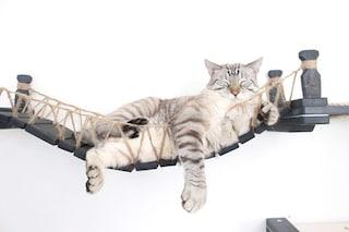 Mobili per gatti: il ponte di Indiana Jones per felini avventurosi