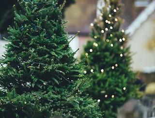 Come riciclare l'albero di Natale dopo le feste
