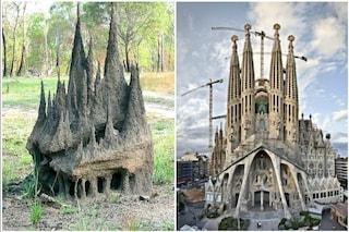 L'incredibile cattedrale costruita dalle Térmiti