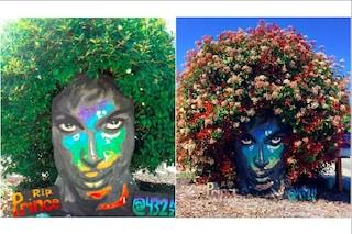 La street art dei cespugli: l'arte di Christine Stein