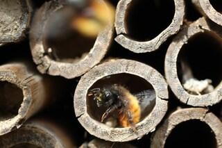 Roma, apre il primo BeeHotel per api solitarie