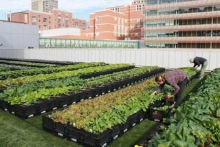 A Boston l'ospedale con la più grande fattoria sul tetto per i pazienti