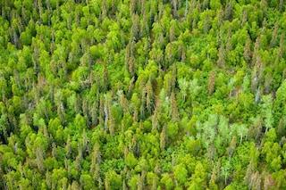 Great Green Wall, una muraglia verde di alberi dall'Africa all'Asia centrale