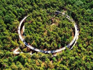 In Belgio la pista ciclabile è a 360° tra gli alberi