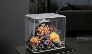 BiOrb, l'acquario più facile al mondo che sembra un oggetto di design