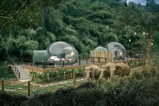 Thailandia, all'Anantara Resort le stanze sono bolle con vista sugli elefanti e la giungla