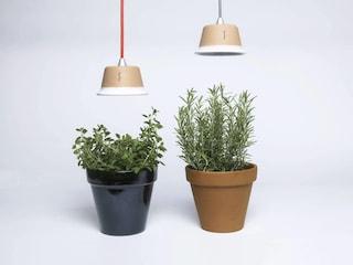 Come fare l'orto in casa: idee e prodotti facili da usare