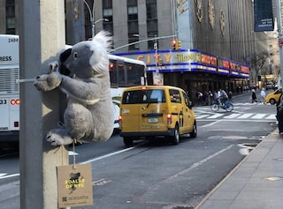 New York invasa dai koala per sensibilizzare sugli incendi in Australia