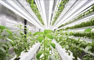 Planty Cube, il sistema diagricolturaverticale che imita i LEGO