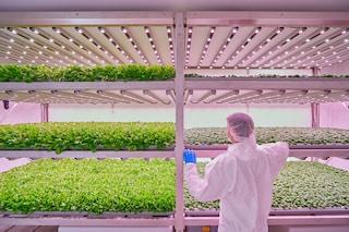 Planet Farms: la più grande vertical farm d'Europa è in Italia
