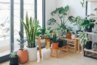 6 piante che riducono lo stress e aiutano la produttività in casa
