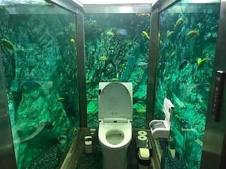 Giappone, all'Hipopo Papa Cafe il bagno è immerso in un acquario
