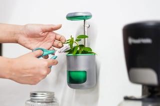 Pico, l'orto in miniatura che si fissa al frigorifero come un magnete