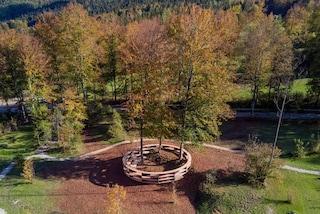 Stefano Boeri partecipa ad Arte Sella con Tree room, la stanza di alberi senza pareti