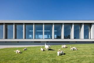 Hotel Canino e Felino, l'albergo per cani e gatti in Portogallo
