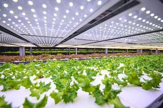 La fattoria verticale grande quanto 20 campi da calcio che produce 1t di cibo all'anno