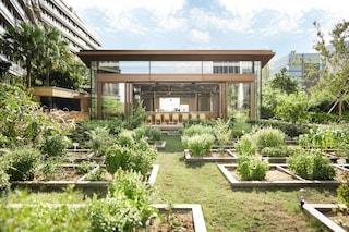 Il centro di Hong Kong diventa una grande riserva naturale nella giungla di cemento