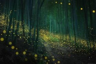 Il fotografo di lucciole che cattura mondi magici nelle foreste giapponesi