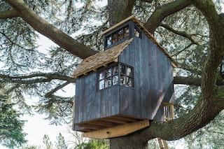 Questa casa è come un nido di uccelli sull'albero ma a grandezza umana