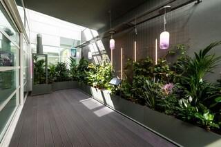 Come creare una foresta viva indoor per purificare l'aria